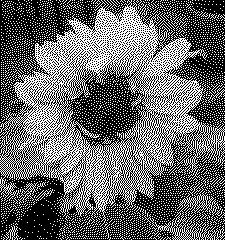 Image converted to monochrome using Floyd-Steinberg Dithering