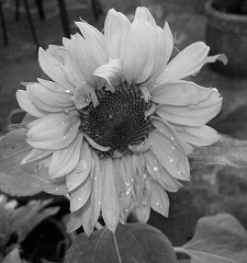 Grayscale converted to color