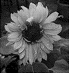 Image converted to monochrome using Jarvis, Judice & Ninke Dithering