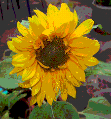 Color-safe image created using Ordered Dithering
